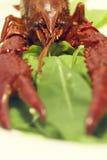 рыбы craw Стоковые Изображения