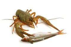 рыбы crawfish Стоковое Изображение