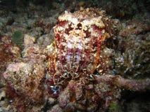 рыбы cuttle Стоковая Фотография RF
