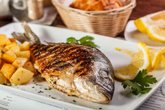 Рыбы Dorado Стоковые Изображения RF