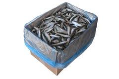 Рыбы Frozzen Стоковая Фотография