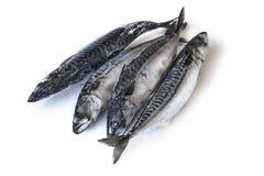 Рыбы Frozzen Стоковые Фото
