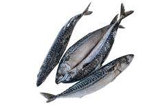 Рыбы Frozzen Стоковое Изображение