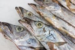 Рыбы Hairtail Стоковая Фотография