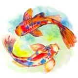 Рыбы koi акварели нарисованные рукой Стоковая Фотография RF