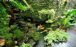 Рыбы Koi Стоковые Фото