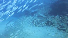 Рыбы os банка стоковые фото