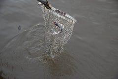 Рыбы Pati рыбной ловли стоковая фотография rf