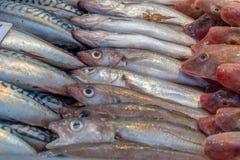 Рыбы seasonFresh Forrest осенью продали на рыбном базаре стоковая фотография