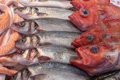 Рыбы seasonFresh Forrest осенью продали на рыбном базаре стоковые фотографии rf