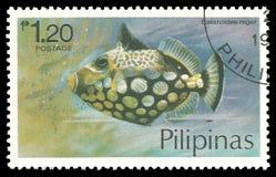 Рыбы, Triggerfish клоуна Стоковые Фото