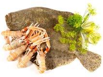 Рыбы Turbot - камбалообразные стоковые изображения rf