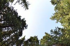 Рыб-глаз Treetop len стоковое фото rf