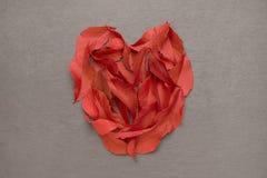 Рыжеватое сердце foilage осени Стоковая Фотография