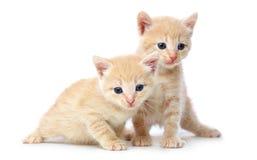 2 рыжеволосых котят. Стоковое фото RF