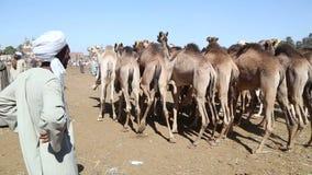 Рынок верблюда Daraw, Египет сток-видео