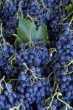 рынок виноградины Стоковое Изображение