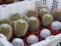 Рынок кактуса мини Стоковые Изображения