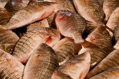 рынок льда рыб свежий Стоковое Изображение
