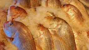 Рынок морепродуктов Стоковое Фото