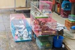 Рынок птицы Стоковая Фотография RF