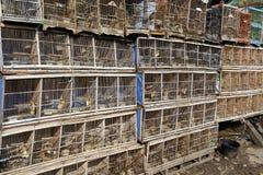 Рынок птицы Pramuka, Джакарта Стоковое Изображение RF
