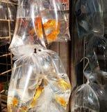 Рынок рыбки Стоковая Фотография RF