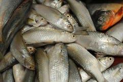 15-04-2018 рынок рыбного базара от Индонезии Стоковые Фотографии RF