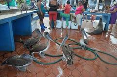 Рынок рыболовов стоковая фотография