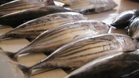 рынок рыб свежий сток-видео