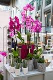 Рынок цветка Киева - первый цветок города справедливый в Киеве, Украине 18-ое сентября 2016 Стоковое Изображение