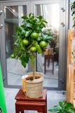 Рынок цветка Киева - первый цветок города справедливый в Киеве, Украине 18-ое сентября 2016 Стоковая Фотография RF