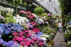 Рынок цветка на острове цитировать, Париже Стоковые Изображения