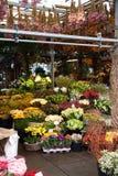 рынок цветка amsterdam Стоковое Фото