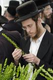 Рынок 4 видов на еврейский праздник Sukkot Стоковые Изображения