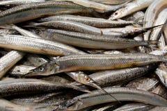 рынок garfish рыб свежий Стоковое Изображение