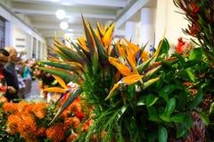 Рынок Hall Фуншала, Мадейры стоковая фотография