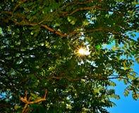 Рэй солнца Стоковые Фотографии RF