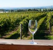 Стекло вина и виноградник Стоковые Фото