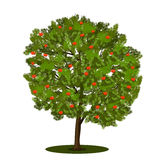 Рябина дерева с зелеными листьями Стоковые Фотографии RF