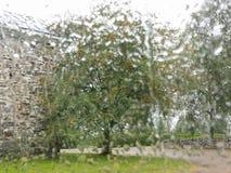 Рябина с ягодами растет тропой стоковая фотография rf