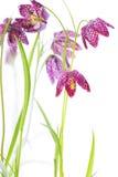 Красивейшие цветки над белизной Стоковое Изображение RF
