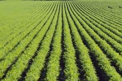 Рядки на зеленом заводе стоковое изображение