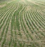 рядки травы Стоковые Изображения RF