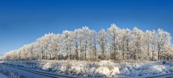 рядок дубов Стоковое Фото