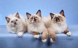 рядок котят лежа стоковое изображение