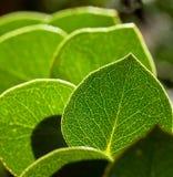 рядок листьев Стоковое Фото