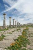 рядок стародедовской колонки римский Стоковые Фотографии RF