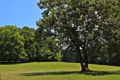 Ряд зеленых цветов Стоковые Фото