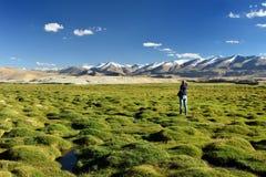 Ряд индийских гор Гималаев - Karakorum - озеро Tso Kar стоковые изображения